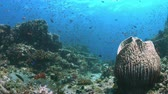 snapper : Colorful coral reef with plenty fish. 4k footage