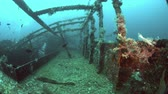 wreck dive : Alma Jane wreck in Puerto Galera. Wreckdiving in Philippines. 4k footage