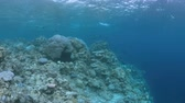 изменение : When a coral reef this. Coral bleaching is the result of water heating. Above-average seawater is caused by global warming