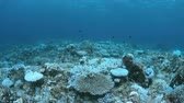 grande angular : Bleached corals. Coral bleaching is the result of water heating. Above-average seawater is caused by global warming