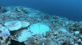 지구 온난화 : Bleached corals. Coral bleaching is the result of water heating. Above-average seawater is caused by global warming