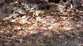 wild bees on the ground in Florida woods