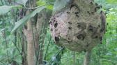 Big Wasp looking for food give Larva on wasp nest motion video footage