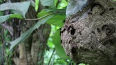 dramatik : Big Wasp looking for food give Larva on wasp nest motion video footage