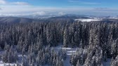 romanya : Winter aerial 4k drone view of snow covered fir trees and forest in the mountains