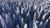 wintertime : Winter aerial 4k drone view of snow covered evergreen forest. Flying above of the top of the pine trees