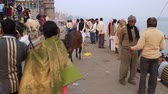 varanasi : Varanasi, India, December 2015. Daily life in a ghat on the Ganges River. Stock Footage