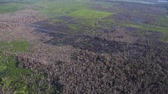 Kalimantan, Borneo, Indonesia, February 2016: Aerial view of the burned forest near the palm plantations.