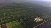 Kalimantan, Borneo, Indonesia, February 2016: Aerial view of palm plantations. Stockvideo