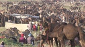 fiera : Pushkar, Rajasthan India, November 2011: Overview of the Camel Fair.