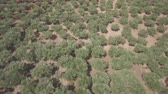 4K ungraded Aerial view of olive tree field in Zakynthos Zante island, Greece - Log Dostupné videozáznamy