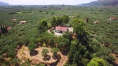 4K Aerial view of olive tree field in Zakynthos Zante island, in Greece Dostupné videozáznamy