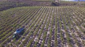 plantation : Harvesting in Rioja Alavesa Stock Footage