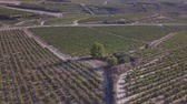Harvesting in Rioja Alavesa Stock Footage