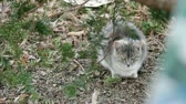 grey : Feral cat sitting in dried leaves under a tree.