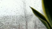 ekran : Rain on window screen, with a plant in front. Focus on screen.