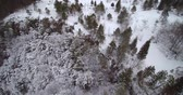 aerial view of a forest in winter after showing Stock Footage
