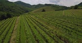 Aerial footage of Countryside Vineyard Agriculture Landscape Winery in Slovenia Europe