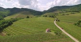 Aerial 4k footage of vineyards in vipava valley Slovenia