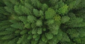 boreal : 4k aerial photo of spruce tree forest in late summer