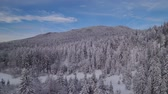 4k aerial view of frozen forest - winter wonder land - winter wander land