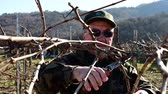 пожилые : winemaker prunning vines in vineyard on early spring afternoon Стоковые видеозаписи