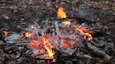 heat : Shashlik on a fire in the forest Stock Footage