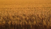 pole : The wheat field of biei town Hill