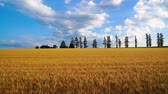 sete : The wheat field of biei town Hill