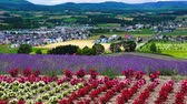 berg : Kamifurano-stad, de bloementuin van Sunrise Mountain Park Stockvideo