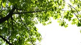 fresco : Fresh green leaves and tree leakage day Stock Footage