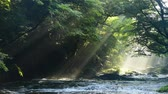 kyushu : Beam of light of the Kikuchi Valley