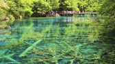 five : Fresh green Jiuzhaigou