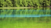taze : Fresh green Jiuzhaigou