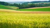 cultivo : The wheat field of biei town Hill