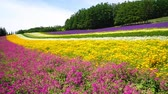 road : Flower garden of Furano