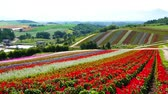 hokkaido : Hill of four seasons flower garden Stock Footage