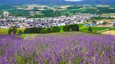 chmury : Flower garden of Furano
