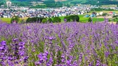 pole : Flower garden of Furano