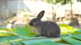 pet friendly : rabbit eating leaves in the garden