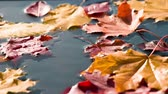 terracota : On the surface of the blue water are bright autumn leaves. Between maple leaves falling drop of pure water. Filmed at a speed of 240fps