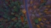 buk : Aerial view of thick forest in autumn with road cutting through
