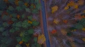 biomasse : Aerial view of thick forest in autumn with road cutting through
