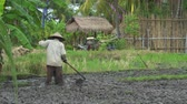 hoe : Farmer working on rice field. People hoe on rice field - October 2017: Ubud, Bali, Indonesia
