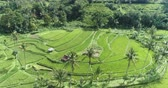 palánta : Aerial view of rice terrace. Flight over of Jatiluwih rice field