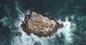 kuş sürüsü : Aerial view of ocean cliff with sea lions - waves washing up on a rock, Pacific Ocean
