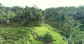 tegalalang : Aerial view of rice terrace. Flight over of rice field Tegalalang, Ubud, Bali