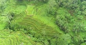 tegalalang : Aerial view of rice terrace. Flight over of rice field  Tegalalang, Ubud, Bali Stock Footage