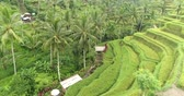 tegalalang : Aerial view of rice terrace. Flight over of rice field - October 2017: Tegalalang, Ubud, Bali