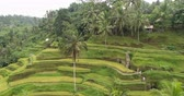 mudas : Aerial view of rice terrace. Flight over of rice field Tegalalang, Ubud, Bali